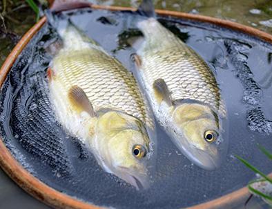 autre-poissons